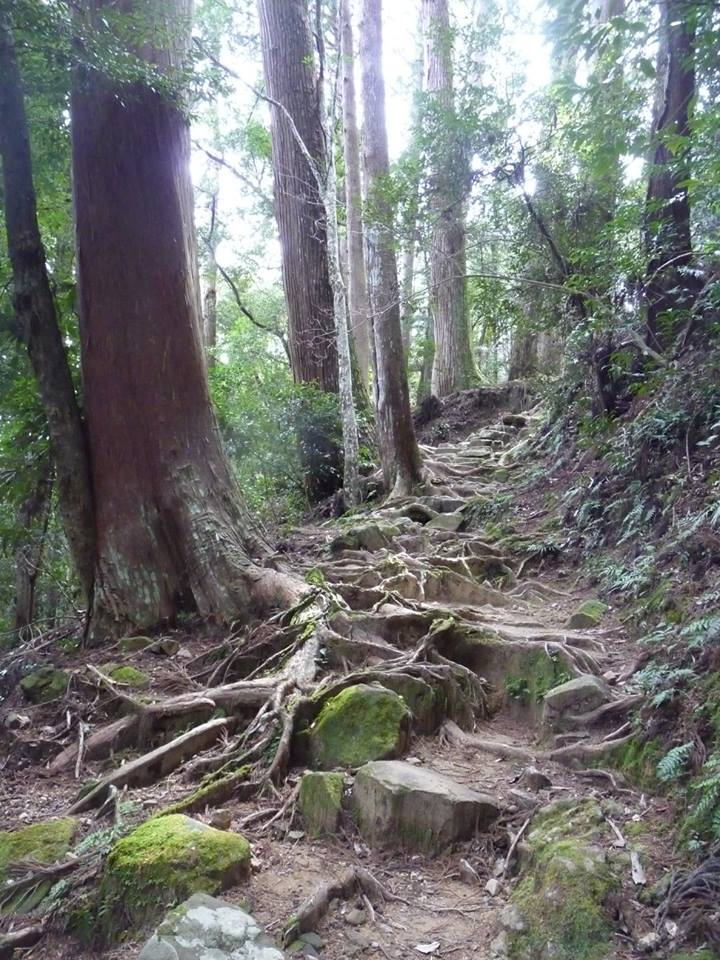 Kumano Kodo, chemin, forêt