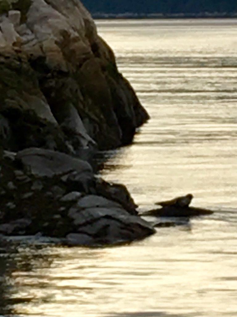 Canada, phoque